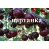 Саженец черевишни Спартанка: фото и описание
