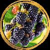 Саженец ежевики Черный бархат: фото и описание