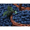 Саженец Голубики Блюкроп: фото и описание