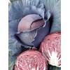 Семена капусты Сизая голубка Арт. 5256