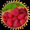 Саженец малины Джоан Джи: фото и описание