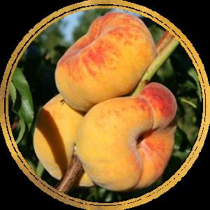 Саженец персика колоновидного Инжирный