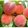 Саженец персика вайн голд Т-3: фото и описание