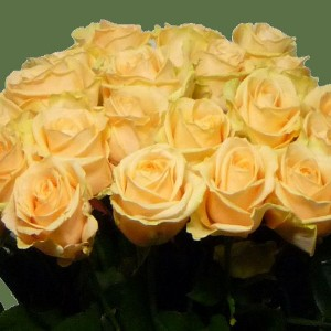 Саженец розы Аваланж Пич