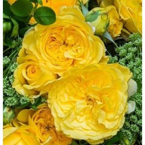 Саженец розы Инка
