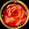 Саженец розы Леонидас: фото и описание