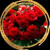 Саженец розы полиантовой Ред Диадем: фото и описание