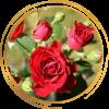 Саженец розы спрей Мирабель: фото и описание
