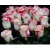 Саженец розы Свитнес (Sweetness): фото и описание