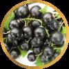 Саженец черной смородины Чёрный жемчуг: фото и описание
