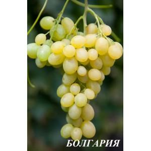 Саженец Винограда Болгария
