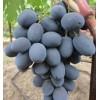 Саженец Винограда Фуршетный: фото и описание