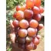 Саженец Винограда Маринка: фото и описание