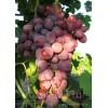 Саженец Винограда Мастер: фото и описание