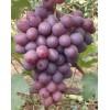 Саженец Винограда Низина: фото и описание