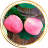 Саженец яблони Аркадик: фото и описание