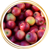 Саженец яблони Беркутовское: фото и описание