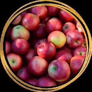 Саженец яблони Беркутовское