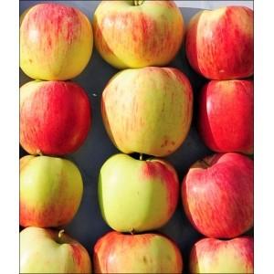 Саженец яблони Бессемянка