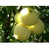 Саженец яблони Дочь Папировки: фото и описание