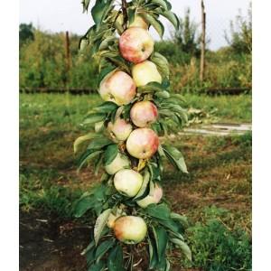 Саженец яблони Гирлянда (колоновидная)
