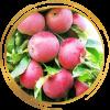 Саженец яблони колоновидной Арбат: фото и описание
