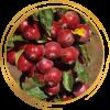 Саженец яблони колоновидной красноцветковая Манящий Аромат: фото и описание