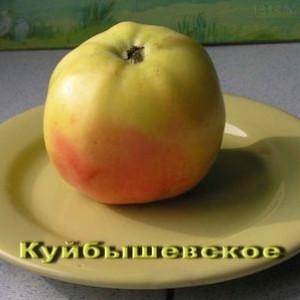 Саженец яблони Куйбышевское