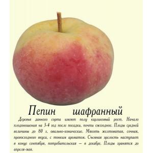 Саженец яблони Пепин шафранный