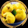 Саженец айвы грушевидной ярко-желтой Бабье лето: фото и описание
