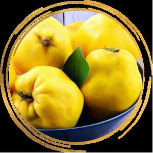 Саженцы Айвы грушевидной ярко-желтой Бабье лето