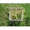 Саженец Дуба черешчатый обыкновенный: фото и описание