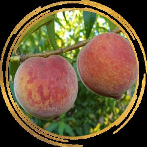 Саженец персика Кондор