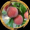 Саженец персика Рубин Принц: фото и описание