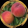 Саженец персика Старк Сангло: фото и описание