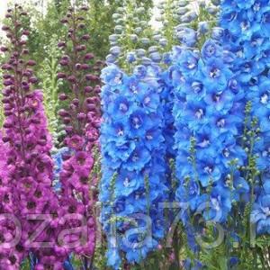 Цветы Дельфиниум смесь Арт. 5216 | Семена