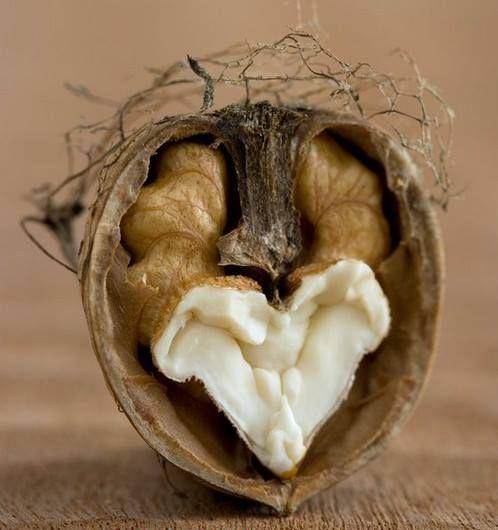 Саженцы грецкого ореха Идеал: фото и описание