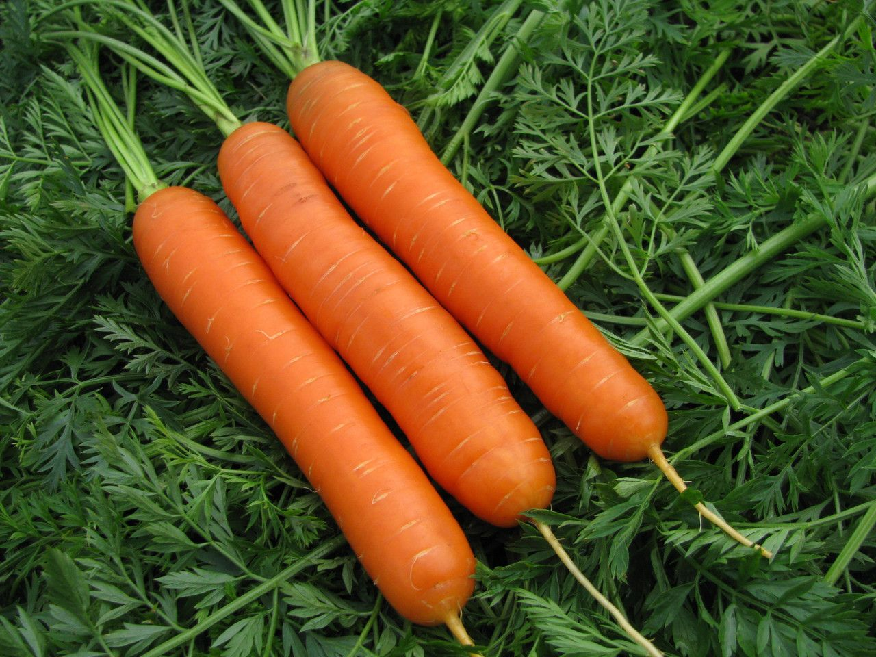 Семена моркови Нантская 4 Арт. 5269