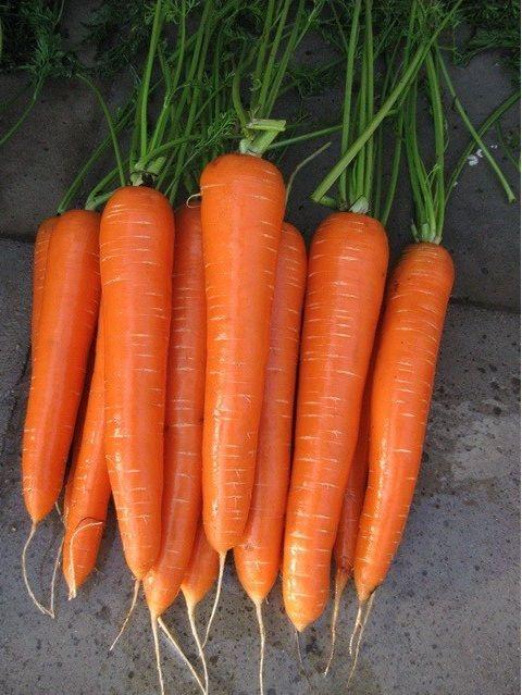 Семена моркови Нантская 5 суперсочная Арт. 5391