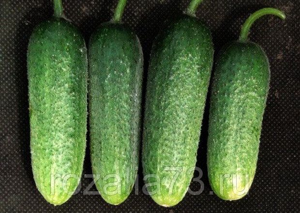 Семена огурца Гармония Арт. 5090