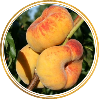 Саженец персика колоновидного Инжирный: фото и описание