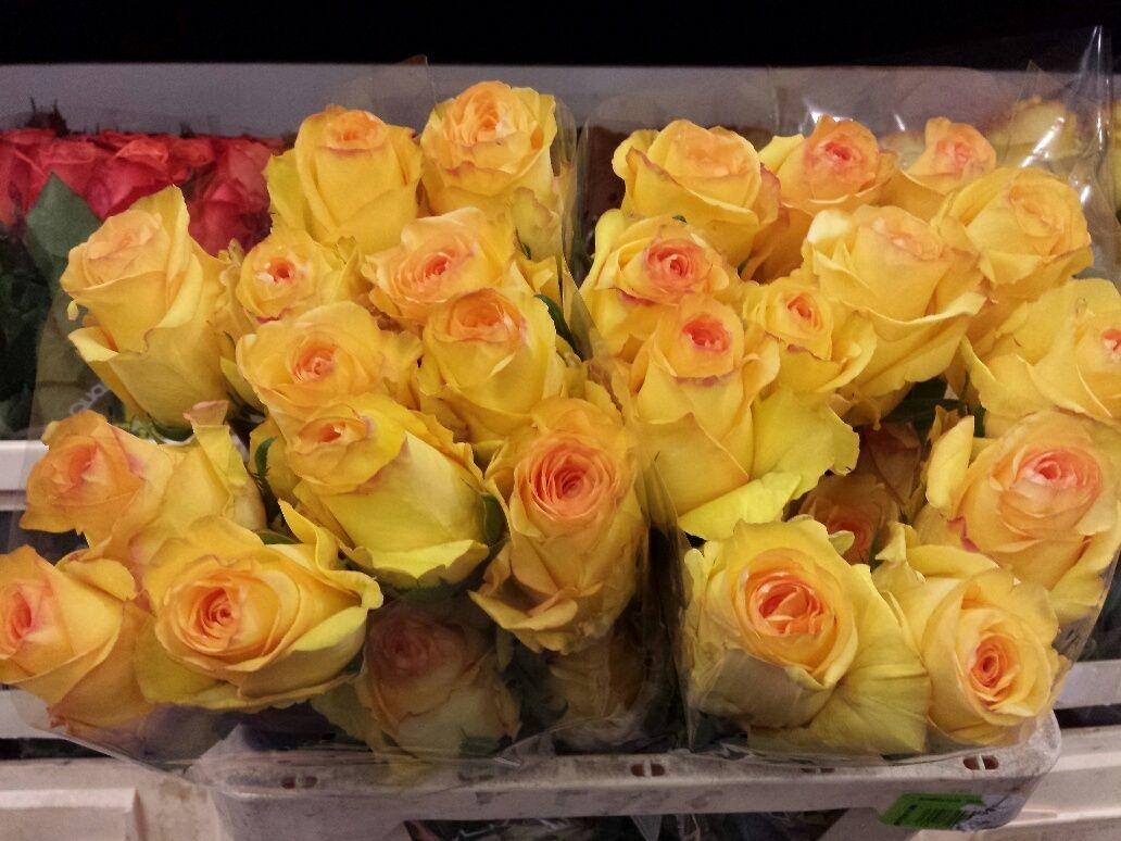 Саженец розы Дэжавю: фото и описание