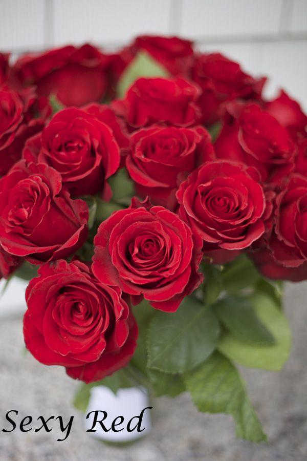 Саженец чайно-гибридной розы Секси Рэд: фото и описание