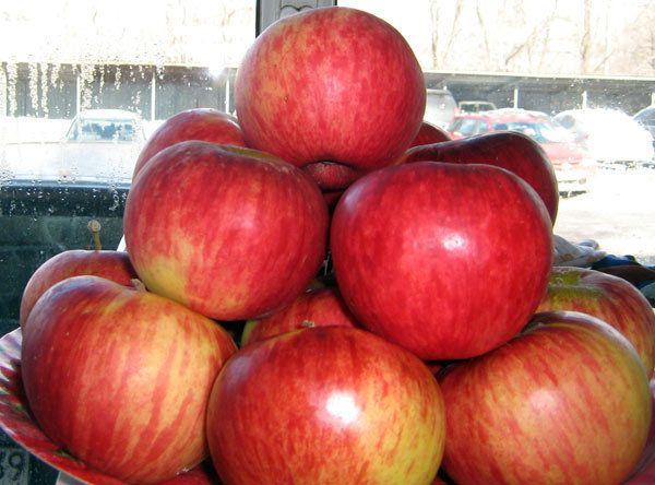 Саженец яблони Апорт: фото и описание