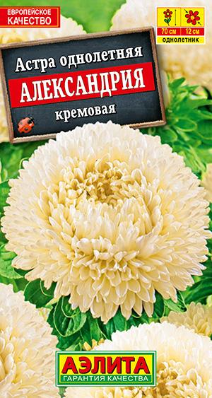 Астра Александрия кремовая --- Одн