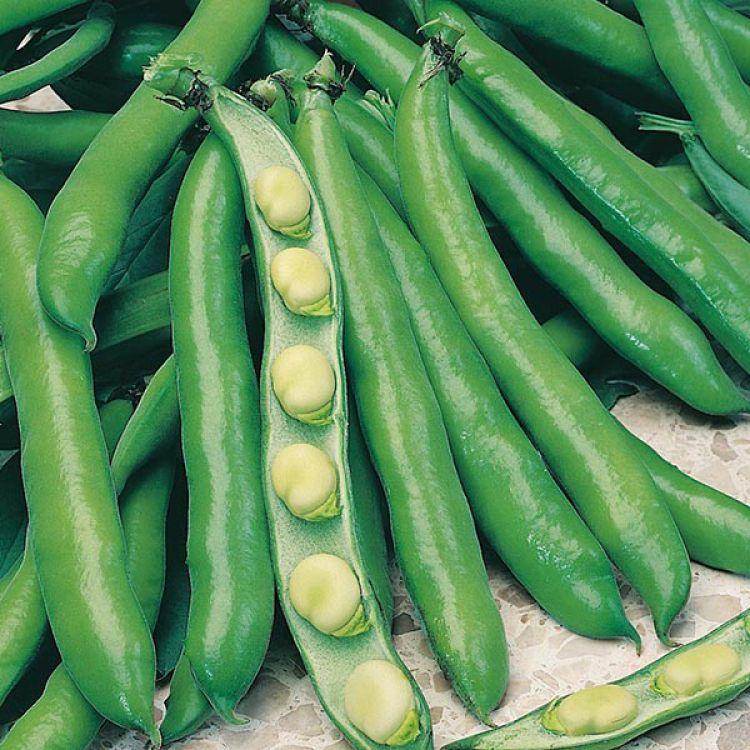 бобы белые овощные крупноплодные арт. 5359
