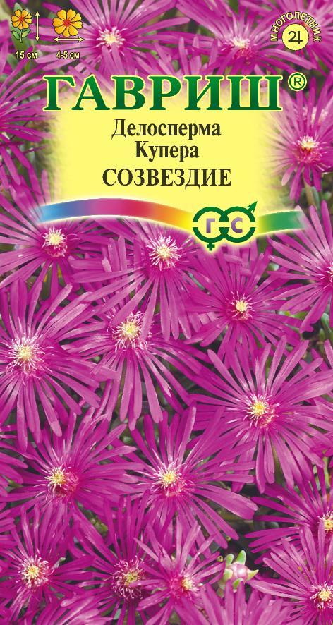 Семена делоспермы Купера Созвездие ( Г )