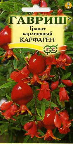 Семена граната Карфаген (карликовый) 5шт ( Г ): фото и описание