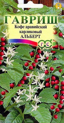 Семена кофе Альберт аравайский карликовый 5 шт. ( Г )