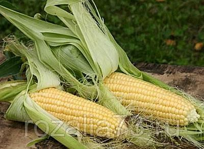 кукуруза ника 353 (сахарная) арт. 5259